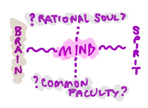 Brain-Mind-Spirit Diagram