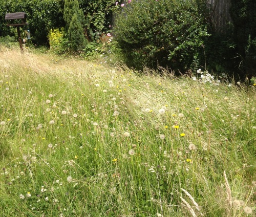 Our garden meadow