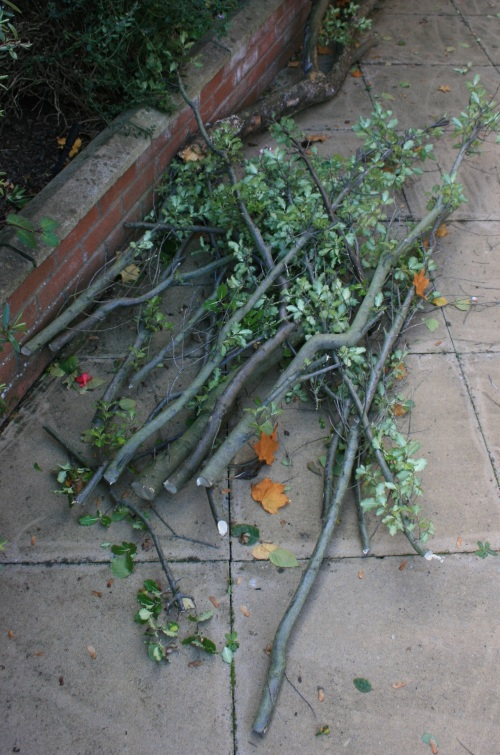 Pile of twigs