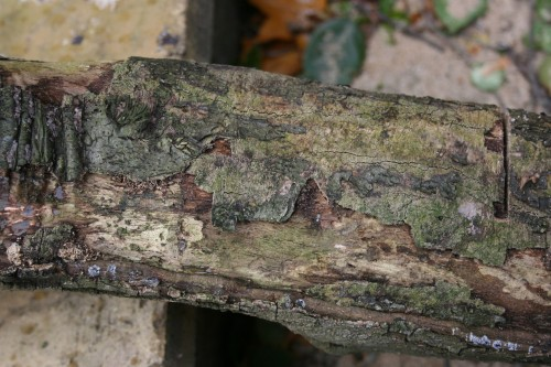 Trunk with cut