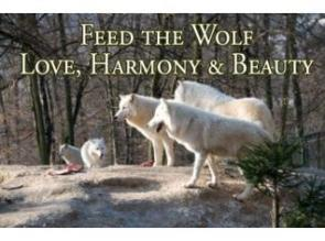 wolf of love