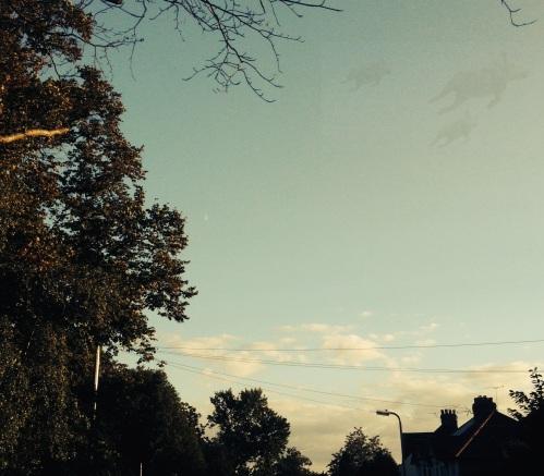 pigs in sky