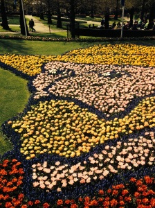 VG in tulips 2