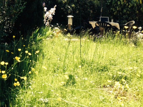 Our meadow