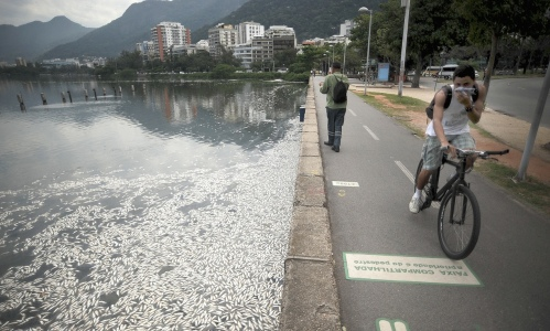 Dead fish clog the Rodrigo de Freitas lake in Rio de Janiero, Brazil. Scientists claim that the fish were starved of oxygen because of pollution. A holistic approach would look closely at the environmental impacts - such as a fish die-off - of economic activities Photograph: Fabio Teixeira/Pacific/Barcroft