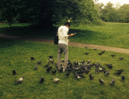 Bird feed in the park