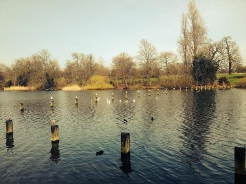 Birds across water